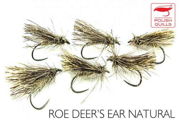 Roe deer ear