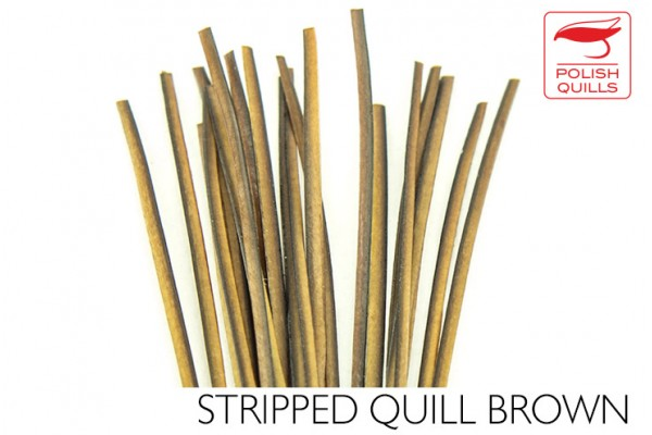 Stripped Peacock Quill