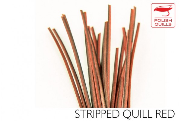 Stripped Quill