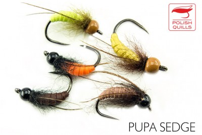 Sedge pupae